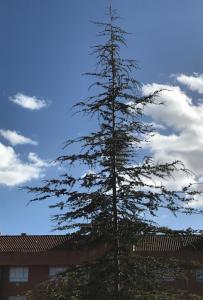 Imagen que contiene cielo, exterior, árbol, conífera  Descripción generada automáticamente